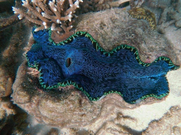 diving in australia