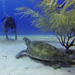 autonomous scuba diver
