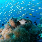 underwater world scuba diving