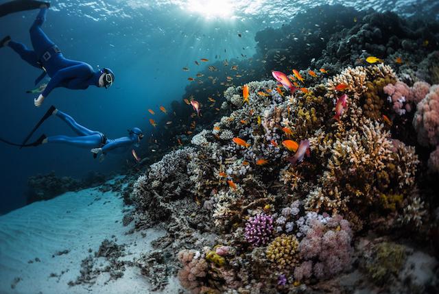 Beim Apnoetauchen taucht man mit nur einem Atemzug. Der Rekord liegt bei 300 Metern Tauchtiefe.