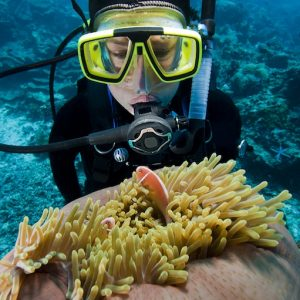 diver and anemonefish